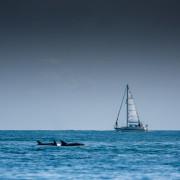 Balades en mer observation dauphins en bateau var mediterranee ile des embiez